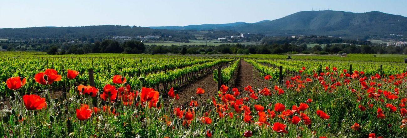 Field of Flowers in Spain